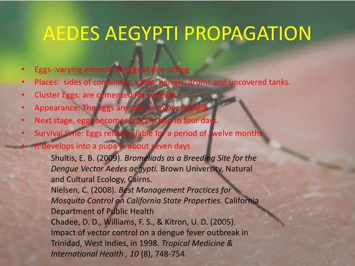 AEDES AEGYPTI PROPAGATION