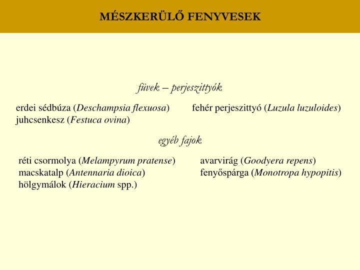 MÉSZKERÜLŐ FENYVESEK