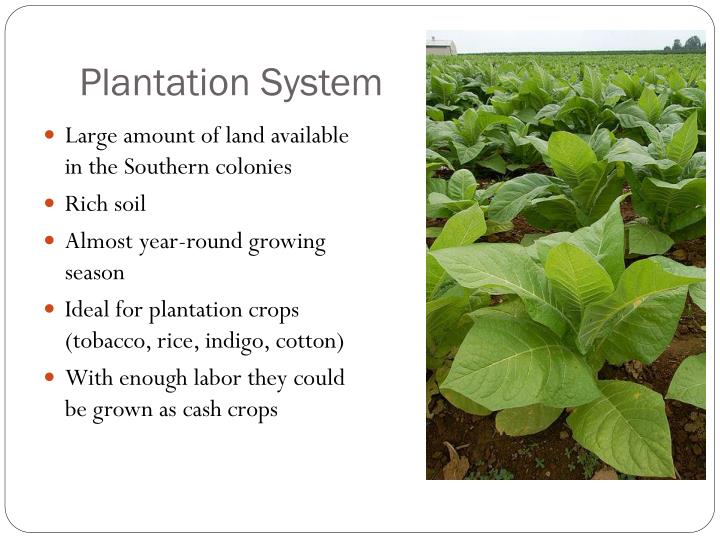 Plantation System