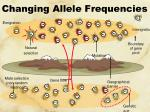 changing allele frequencies1