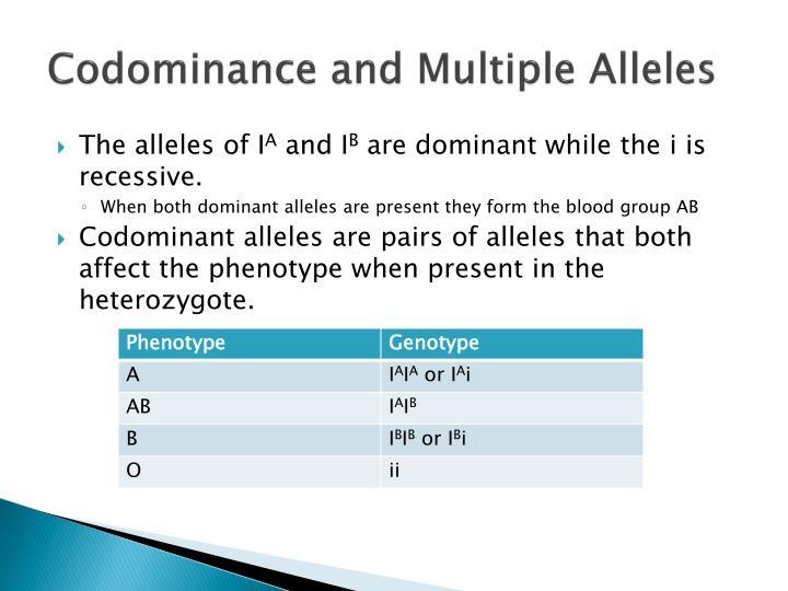 PPT - Theoretical Genetics PowerPoint Presentation - ID:2233870