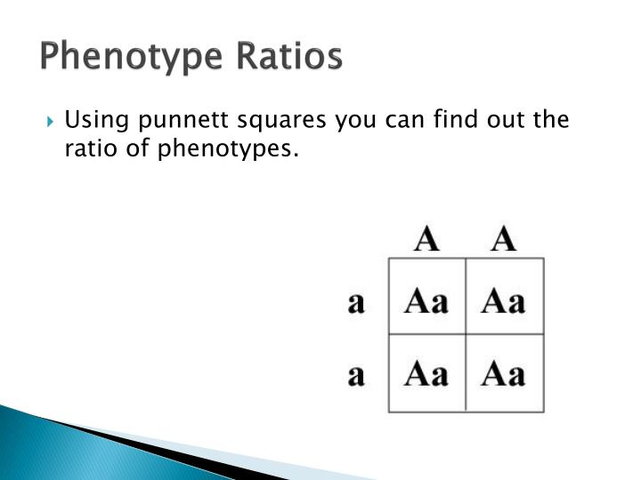 PPT - Theoretical Genetics PowerPoint Presentation - ID ...