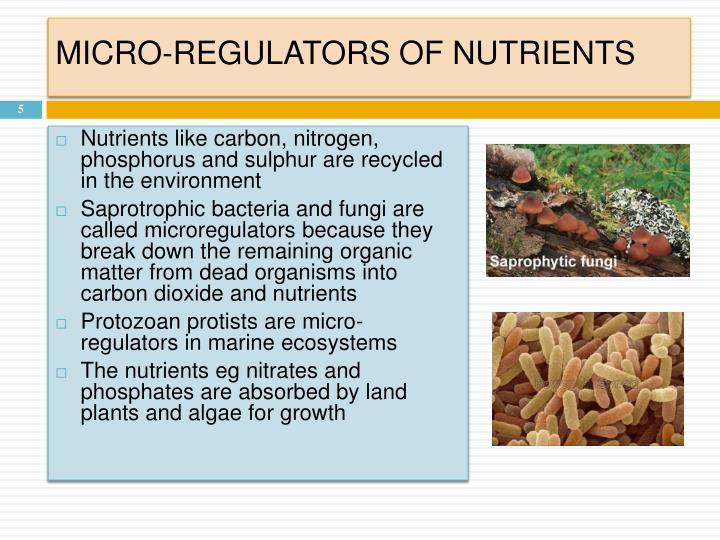 MICRO-REGULATORS OF NUTRIENTS