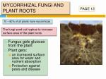 mycorrhizal fungi and plant roots