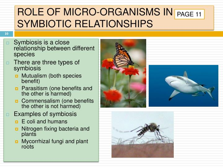 ROLE OF MICRO-ORGANISMS IN SYMBIOTIC RELATIONSHIPS