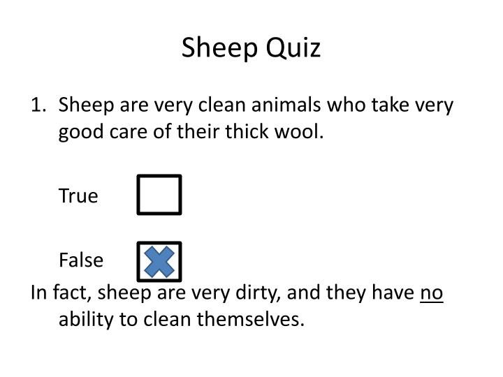 Sheep Quiz