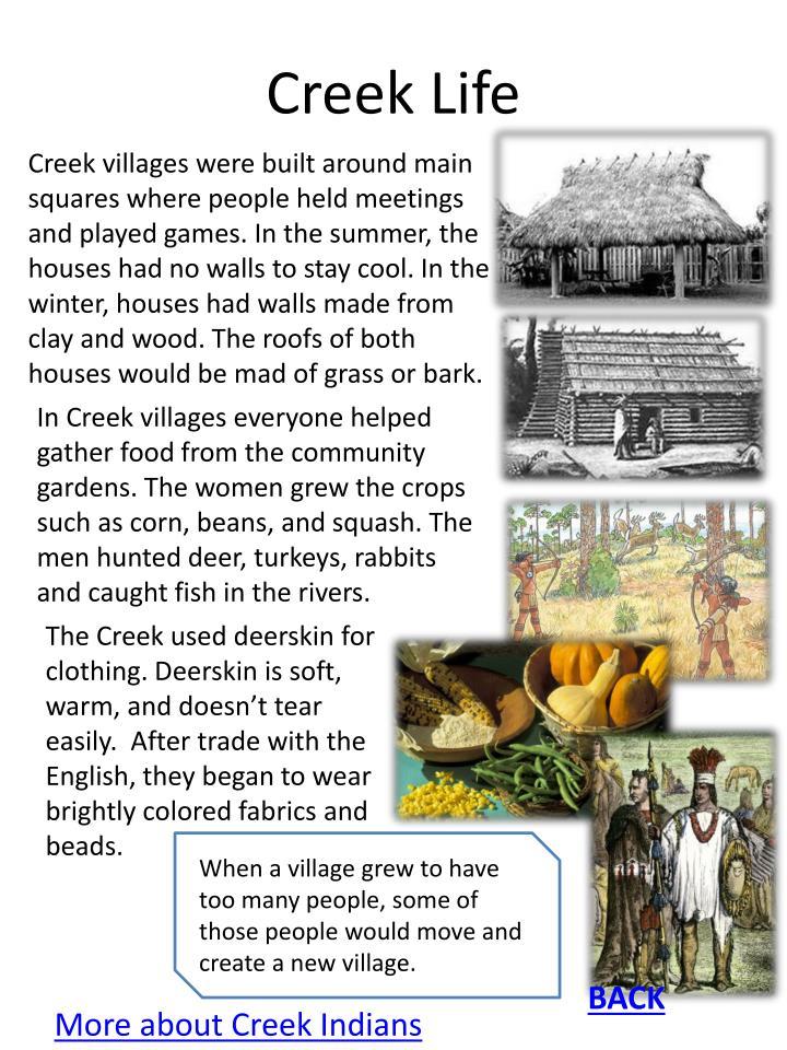 Creek Life