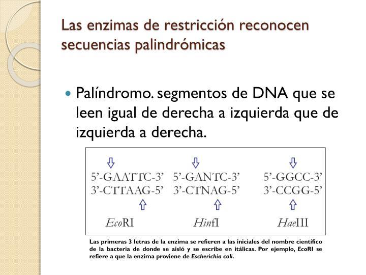 Las enzimas de restricción reconocen secuencias palindrómicas