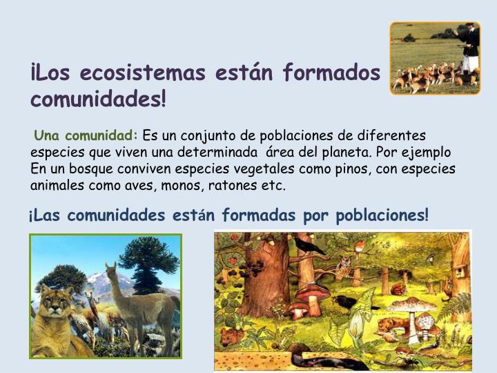 ¡Los ecosistemas están formados por comunidades!
