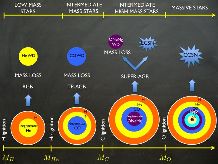 INTERMEDIATE MASS STARS