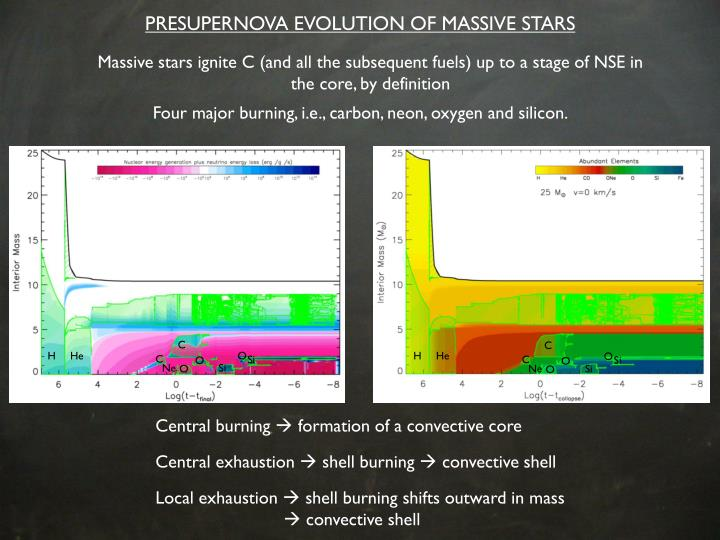 PRESUPERNOVA EVOLUTION OF MASSIVE STARS