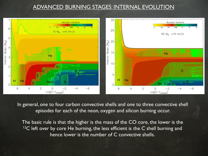 ADVANCED BURNING STAGES: INTERNAL EVOLUTION