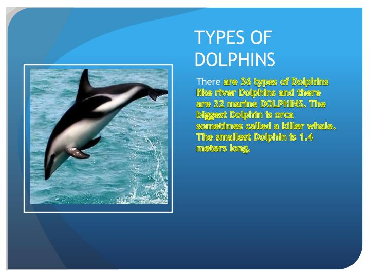 dolphinsworldcom  Dolphin Facts and Information