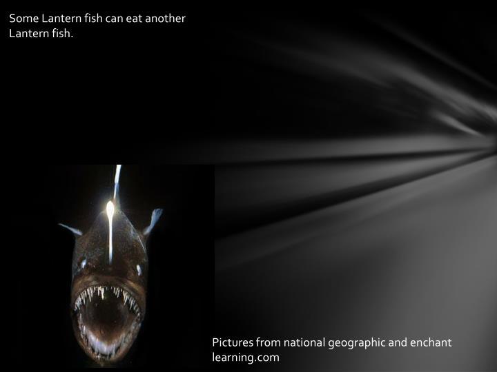 Some Lantern fish can eat another Lantern fish.