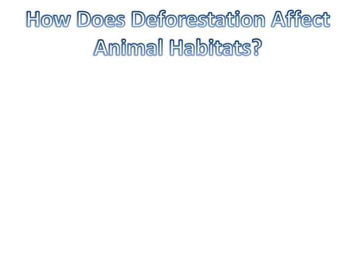 How Does Deforestation Affect Animal Habitats?