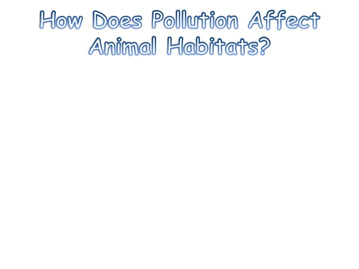 How Does Pollution Affect Animal Habitats?