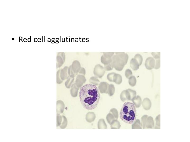 Red cell agglutinates