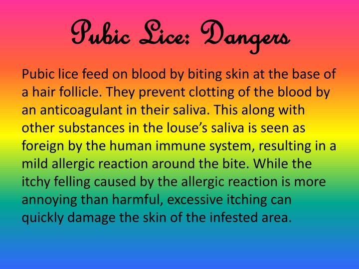 Pubic Lice: Dangers