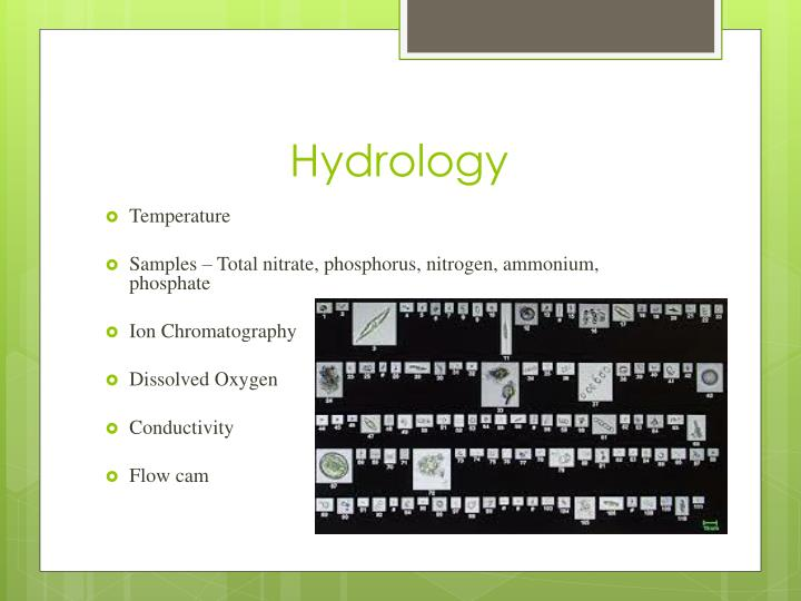 hydrology thesis