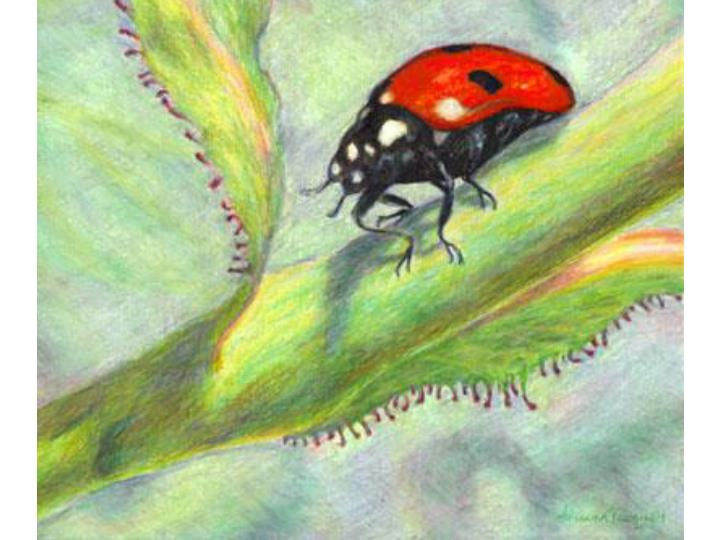Colored pencil bugs