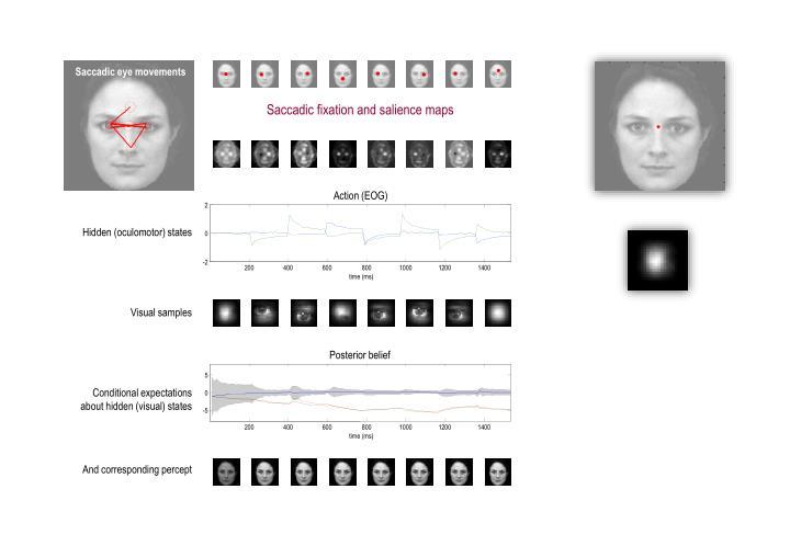 Saccadic eye movements