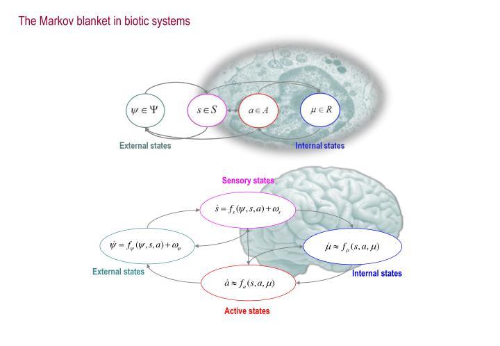 The Markov blanket in biotic systems