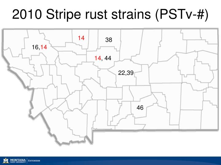 2010 Stripe rust strains (