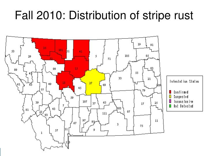 Fall 2010: Distribution of stripe rust
