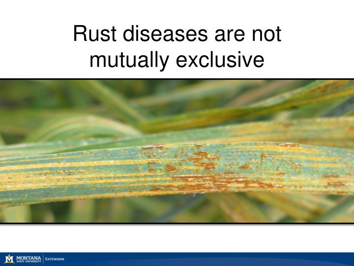 Rust diseases are not mutually exclusive