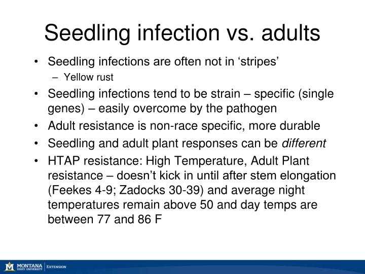 Seedling infection vs. adults