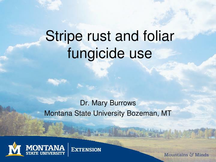 Stripe rust and foliar fungicide use