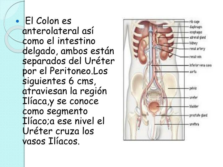 El Colon es