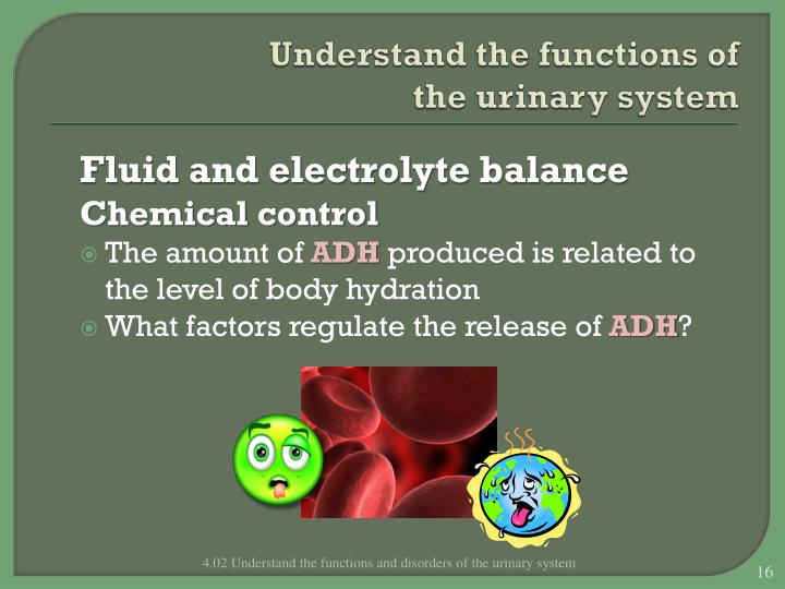 Understand the functions of