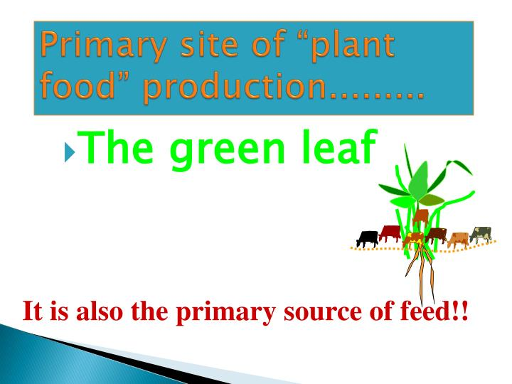 "Primary site of ""plant food"" production........."
