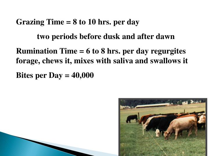 Grazing Time = 8 to 10 hrs. per day