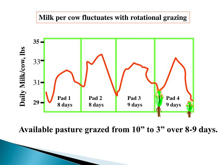 Milk per cow fluctuates with rotational grazing