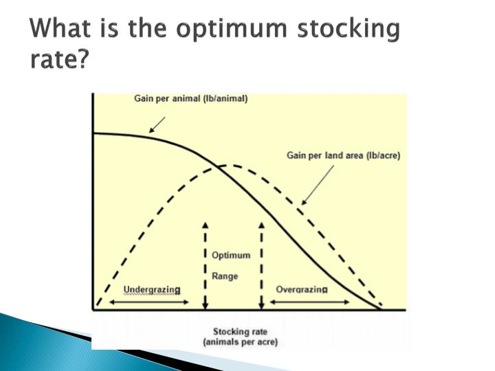 What is the optimum stocking rate?