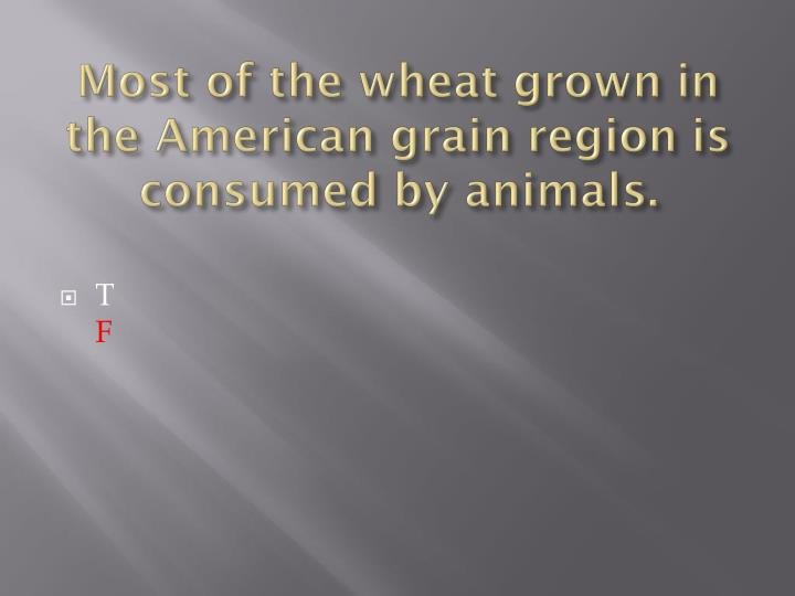 Most of the wheat grown in the American grain region is consumed by animals.