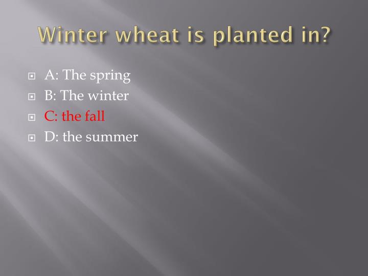 Winter wheat is planted in?