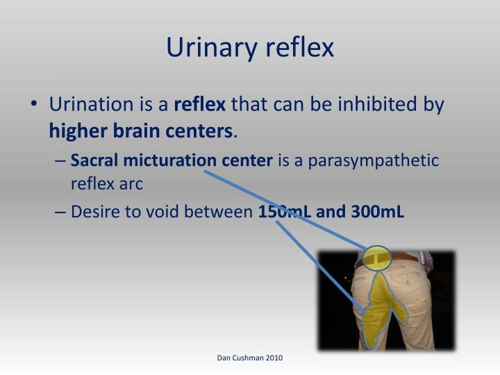 Urinary reflex