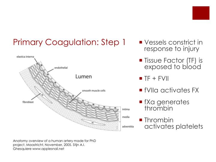 Vessels constrict in response to injury