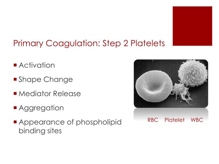 Primary Coagulation: Step 2 Platelets