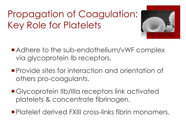 Propagation of Coagulation: Key Role for Platelets