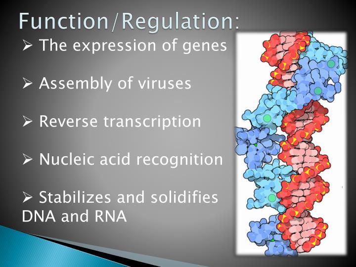 Function/Regulation: