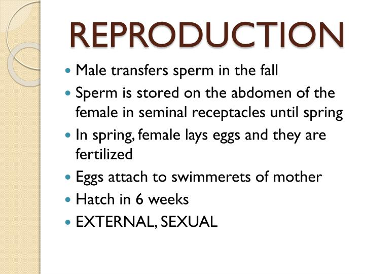 Sperm receptacles parts 1 6 swallow compilation by dk