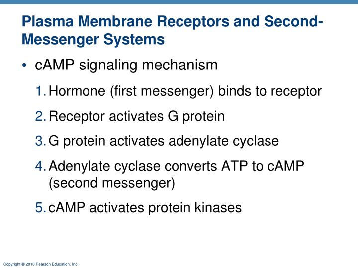 Plasma Membrane Receptors and Second-Messenger Systems