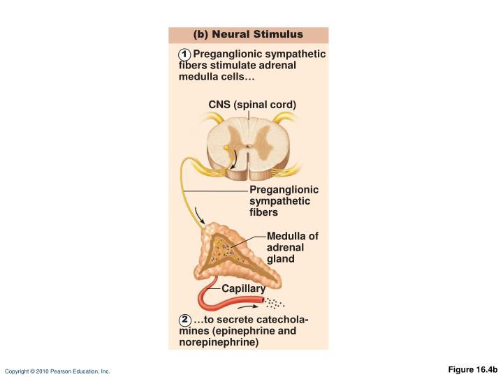 (b) Neural Stimulus