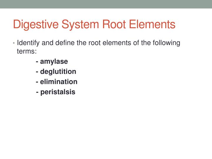Digestive System Root Elements