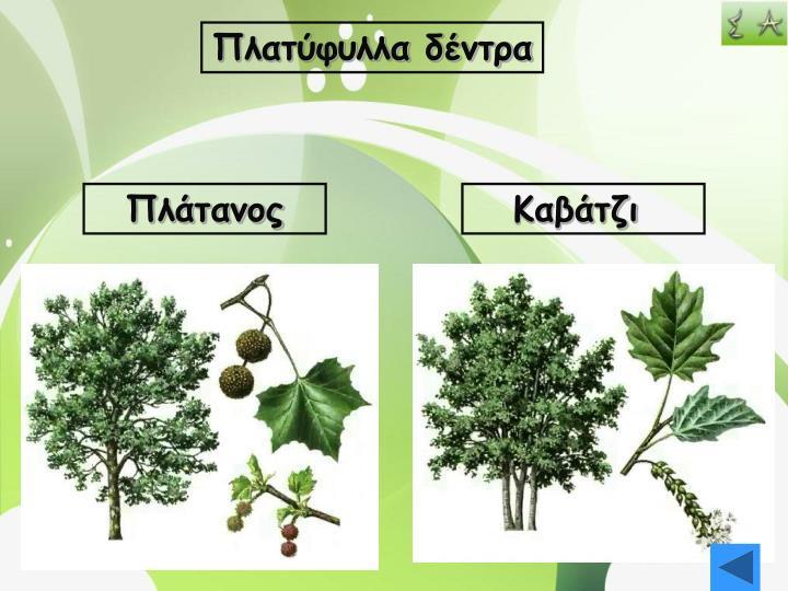 Πλατύφυλλα δέντρα
