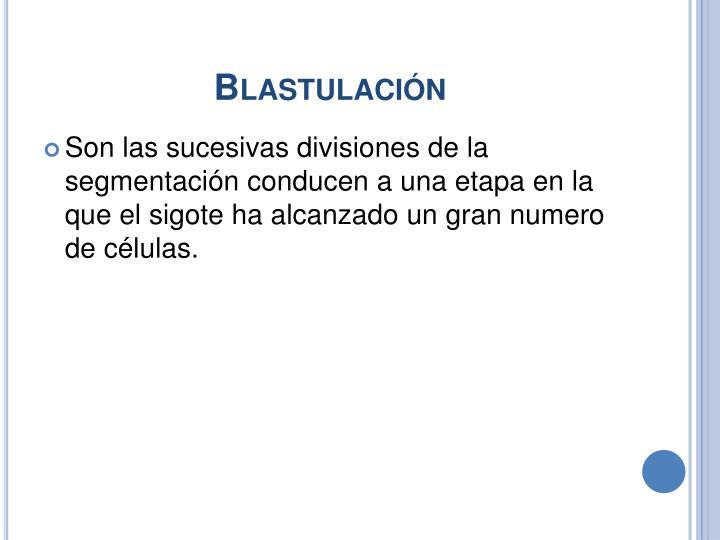 Blastulación